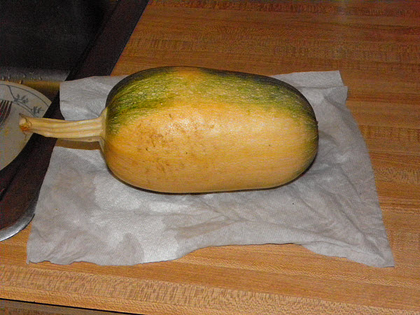 Four weeks later, the squash is ripe enough to pick.