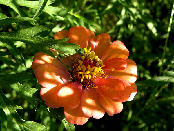 Zinnia and Mystery Herb